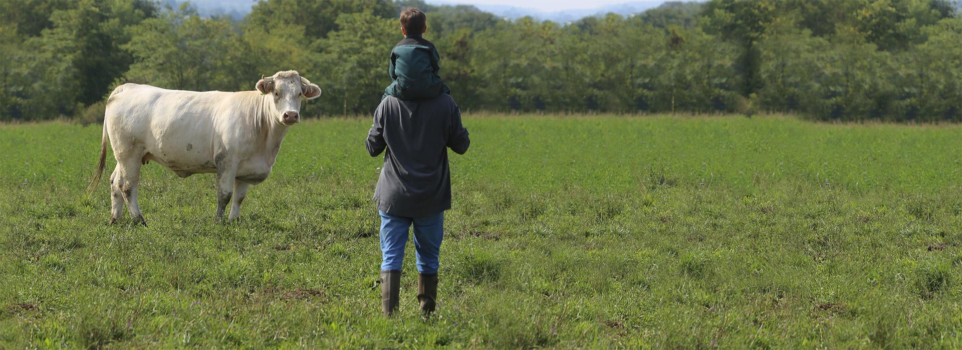 photo d'une vache, d'un père et son fils